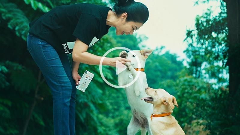 狗狗的教養練習