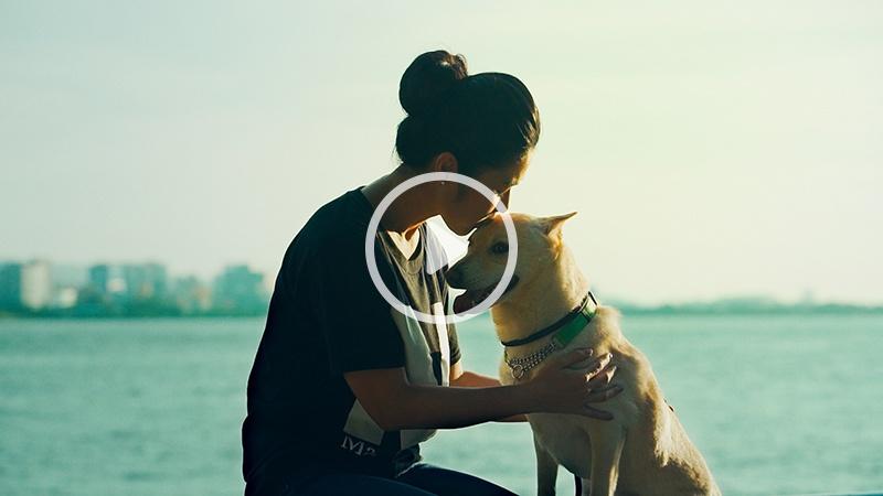 狗狗的醫療照護